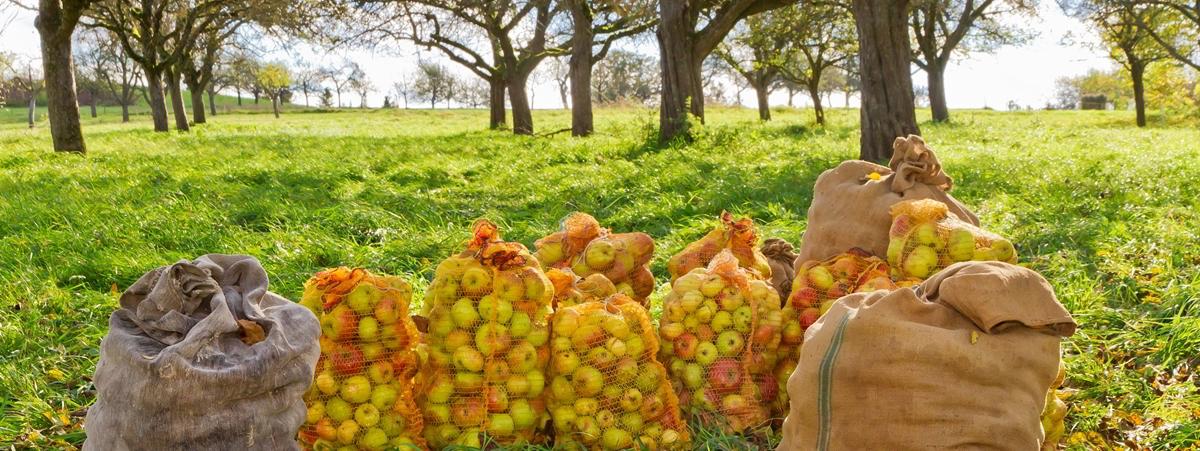 city cider õunasiider